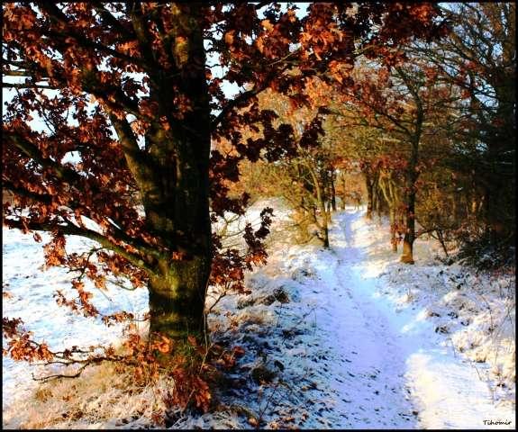 snijeg-u-hovborgu-3.jpg