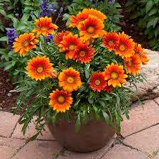 blomst6