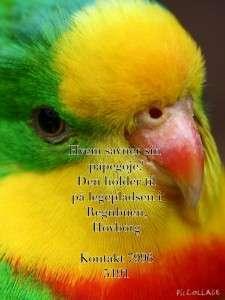 Papegoje
